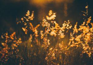 field sunlight