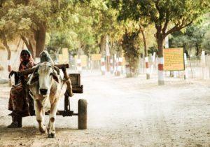 India buffalo trailer