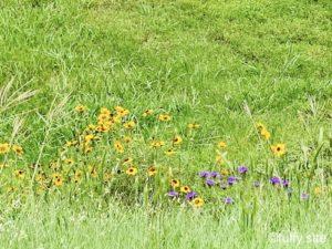 wild flowers green
