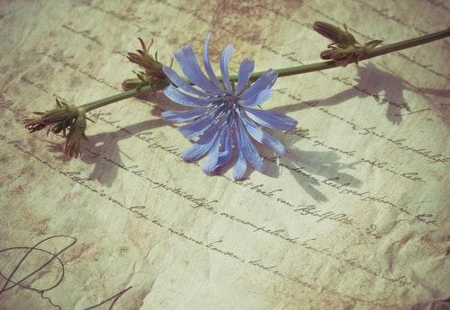 blue flower letter