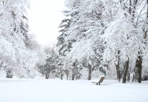 snow forest bench