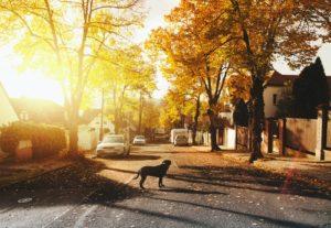 dog house sunset