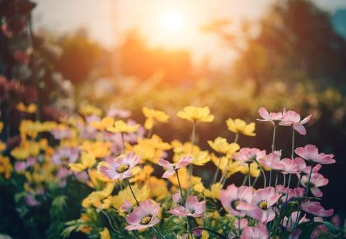 blossom flora flowers